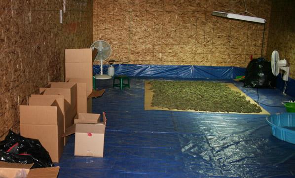 basement grow room design. Basement Grow Room Design